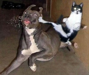 Cat-Kicking-Dog